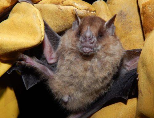 El Pantanoso se destaca por su alta diversidad de murciélagos