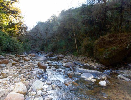 Un relevamiento de biodiversidad en lo más profundo de las Yungas salteñas