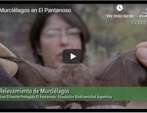 Murciélagos en el Área Silvestre Protegida El Pantanoso