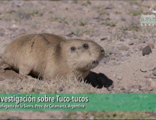 Tuco Tucos, una sociedad subterránea