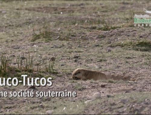 Tuco-Tucos, une société souterraine