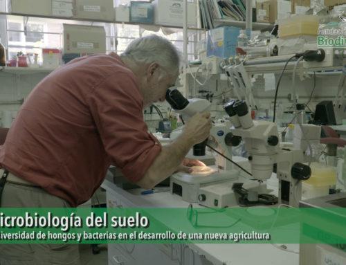 El ecosistema invisible 2, un acercamiento a la microbiología del suelo.